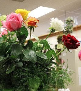These are the Schaaf week old flowers in Bud's experiment. They look perfect.